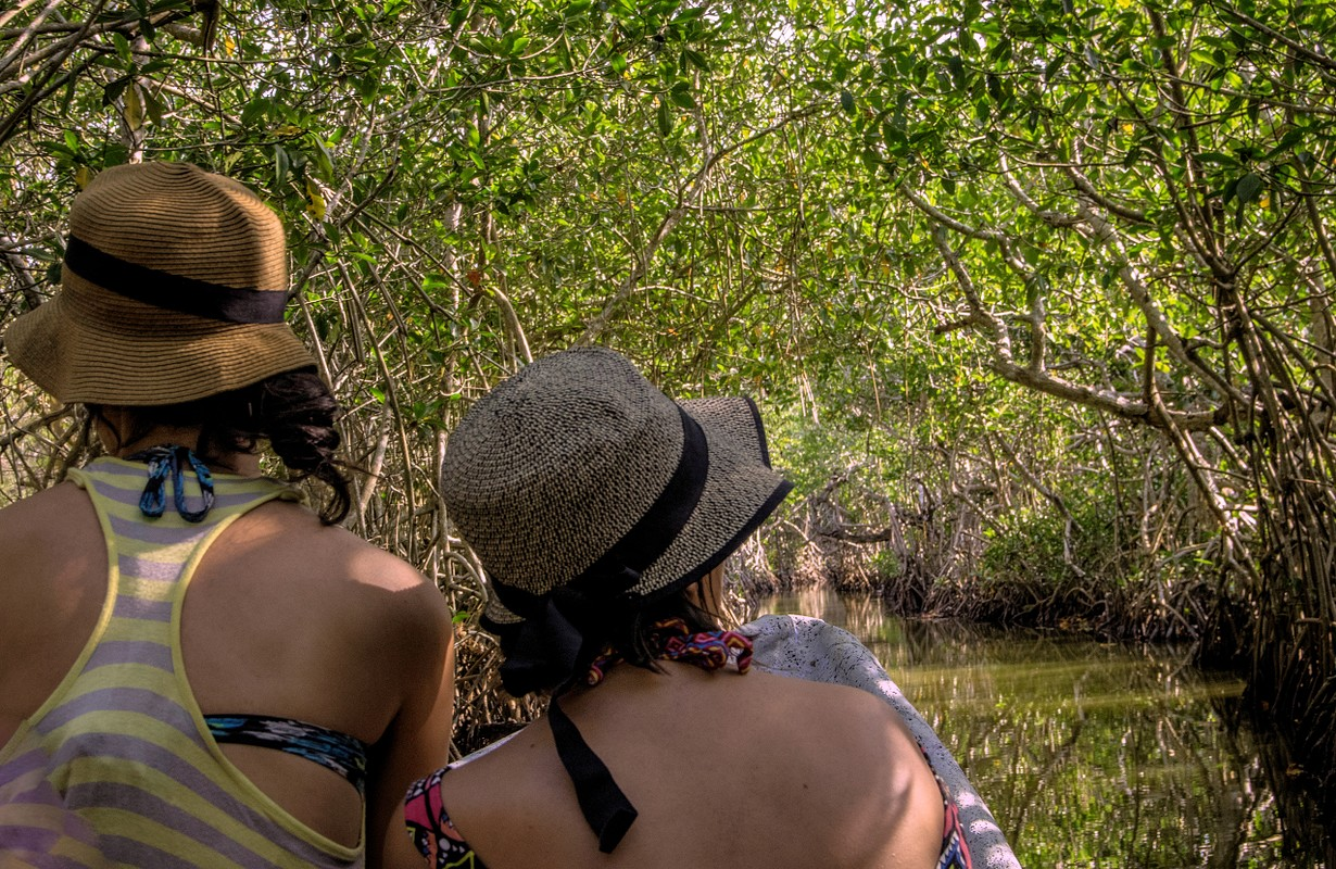 Women on tour of mangrove