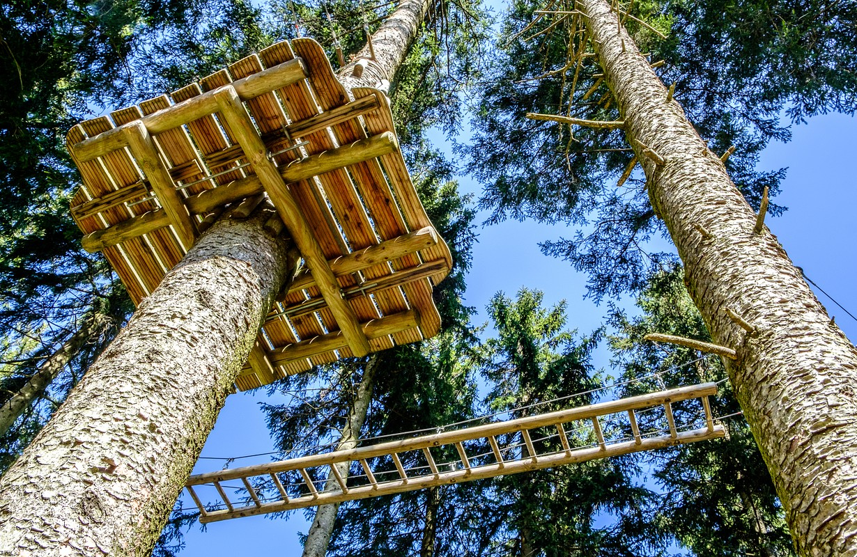 high ropes course at a forest - Image
