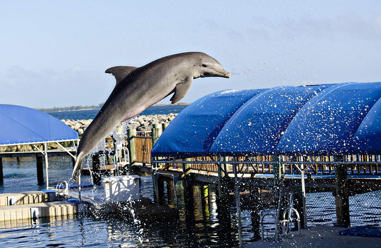 Nassau Dolphin Experience