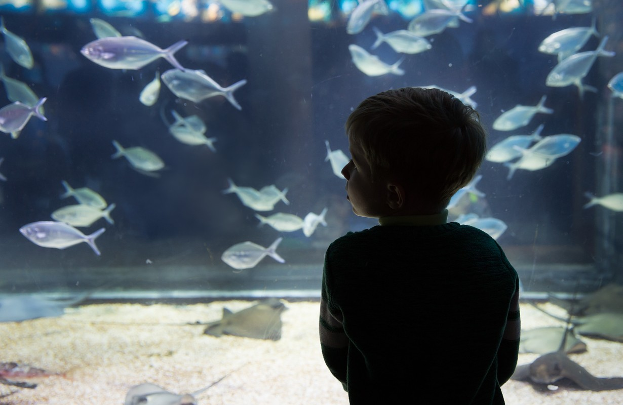 little boy watching fishes in large aquarium