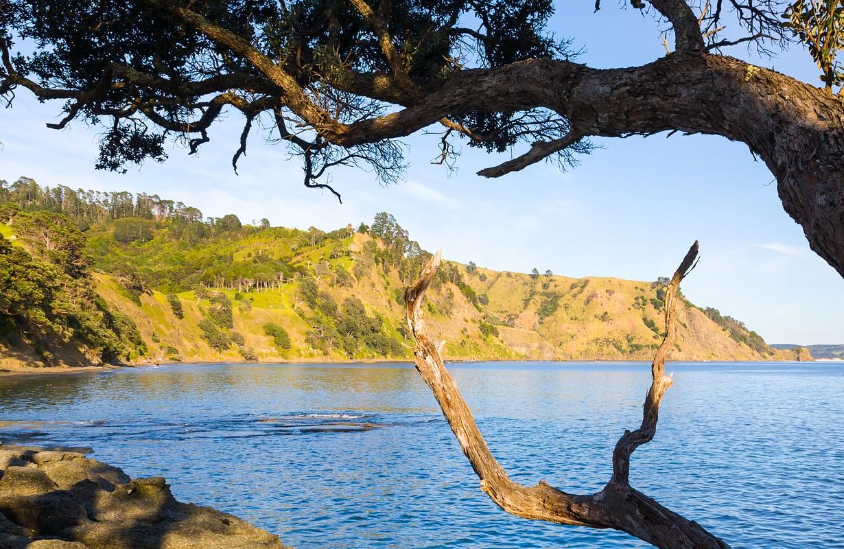 Goat Island Marine Reserve Leigh North Island New Zealand