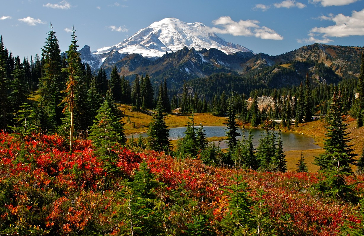 Autumn colors in Mt. Rainier National Park