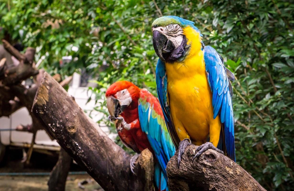 Parrots at a tree