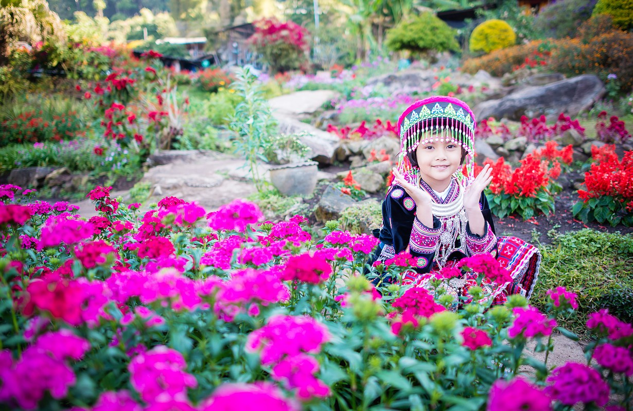 Little girl in Hmong Hill Tribe costumes with flower field, Chiangmai, Thailand