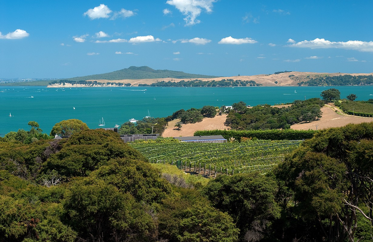 Wide summer shot of Auckland's Waiheke island with winery and grapevines in foreground, and the island volcano called Rangitoto in the distance