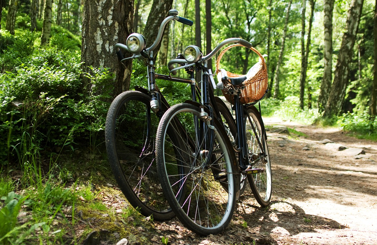 Two bikes standing at the side of a path in a forest