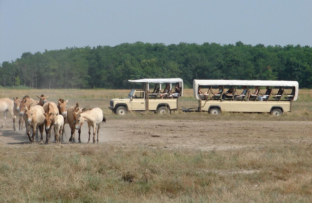 Puszta Safari