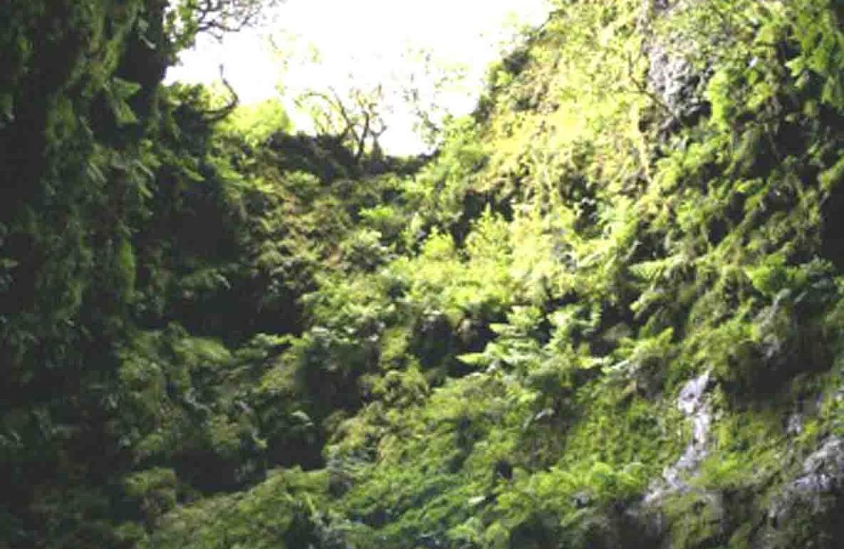 Algar do Carvão, Ilha Terceira, Açores - Portugal.