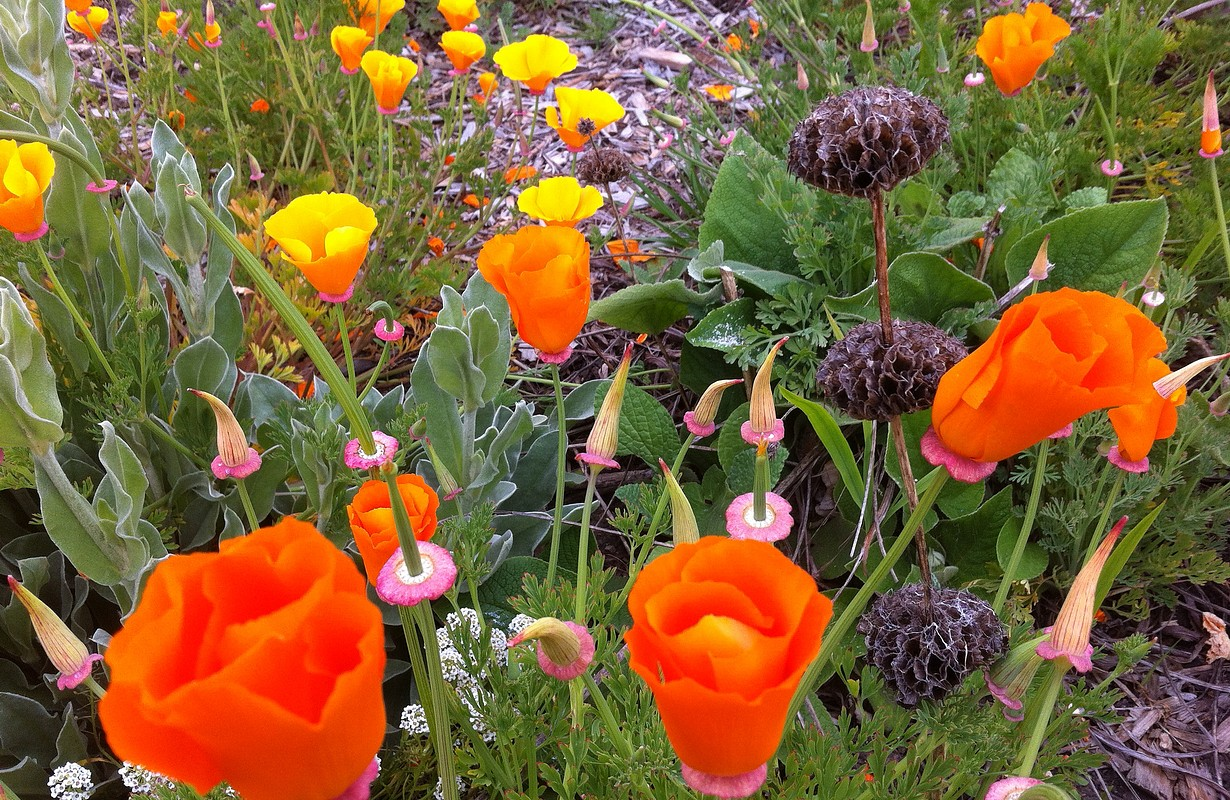 Pacifica Gardens