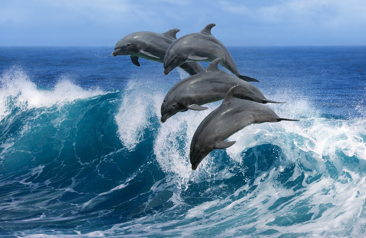 Dolphins jumping out of the ocean