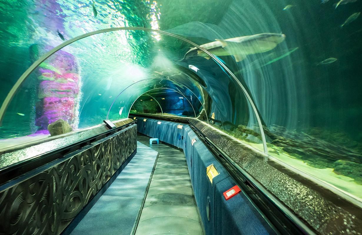 Shark Tunnel SEA LIFE Aquarium