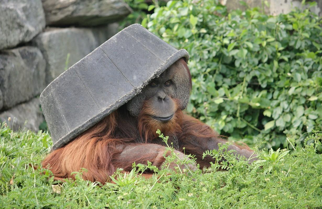 Philadelphia Zoo monkey