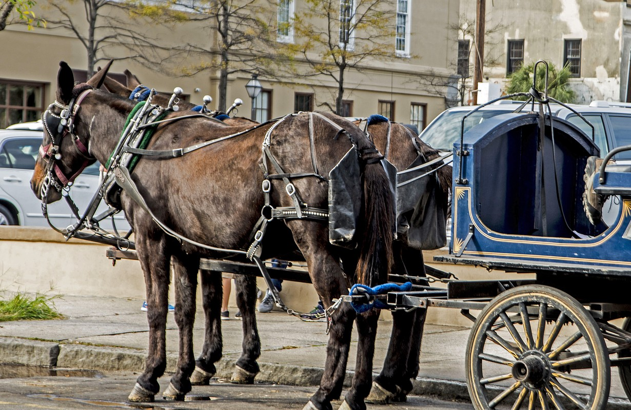 Horse drawn buggy in downtown Charleston.
