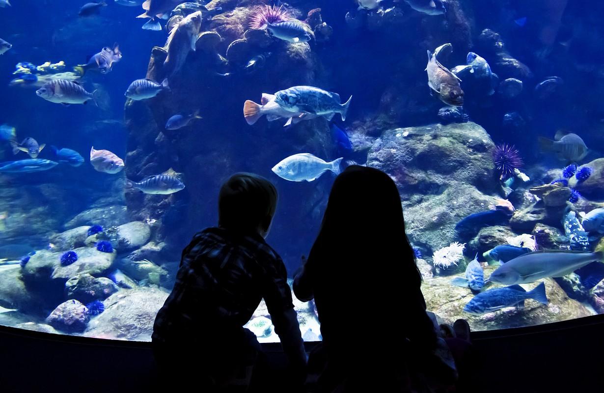 Children watching fish in a large Aquarium