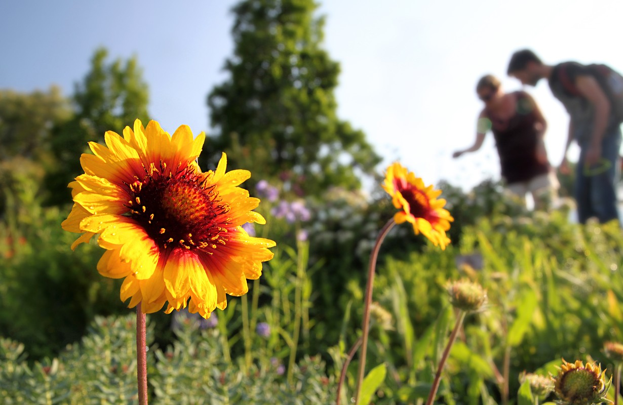 going for a walk through the botanical garden of Uppsala in Sweden (unrecognizable persons with slight lense flare in the background)