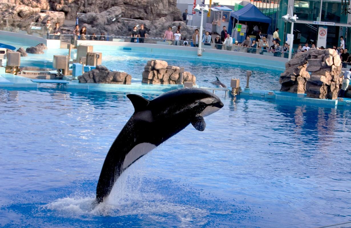 Whale at Nagoya Aquarium