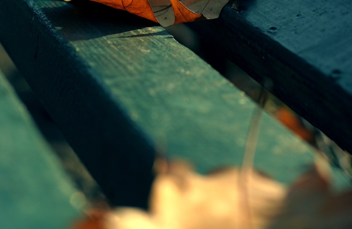 Close up of autumn leaves on a bench in park