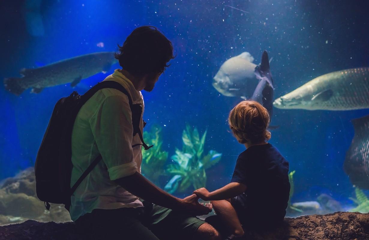 Father and son look at the fish in the aquarium in oceanarium.