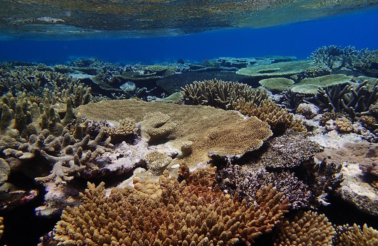 Coral reef, Tonga