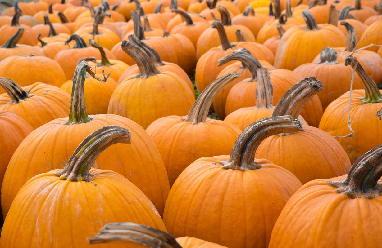 Orange Pumpkins at the Farmers Market