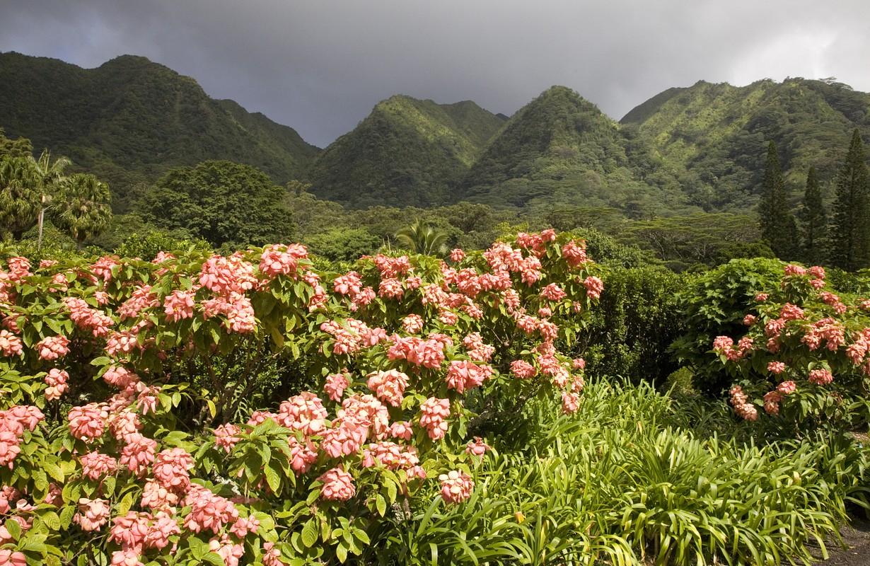 The Harold L Lyon Arboretum botanical gardens inland of Honolulu