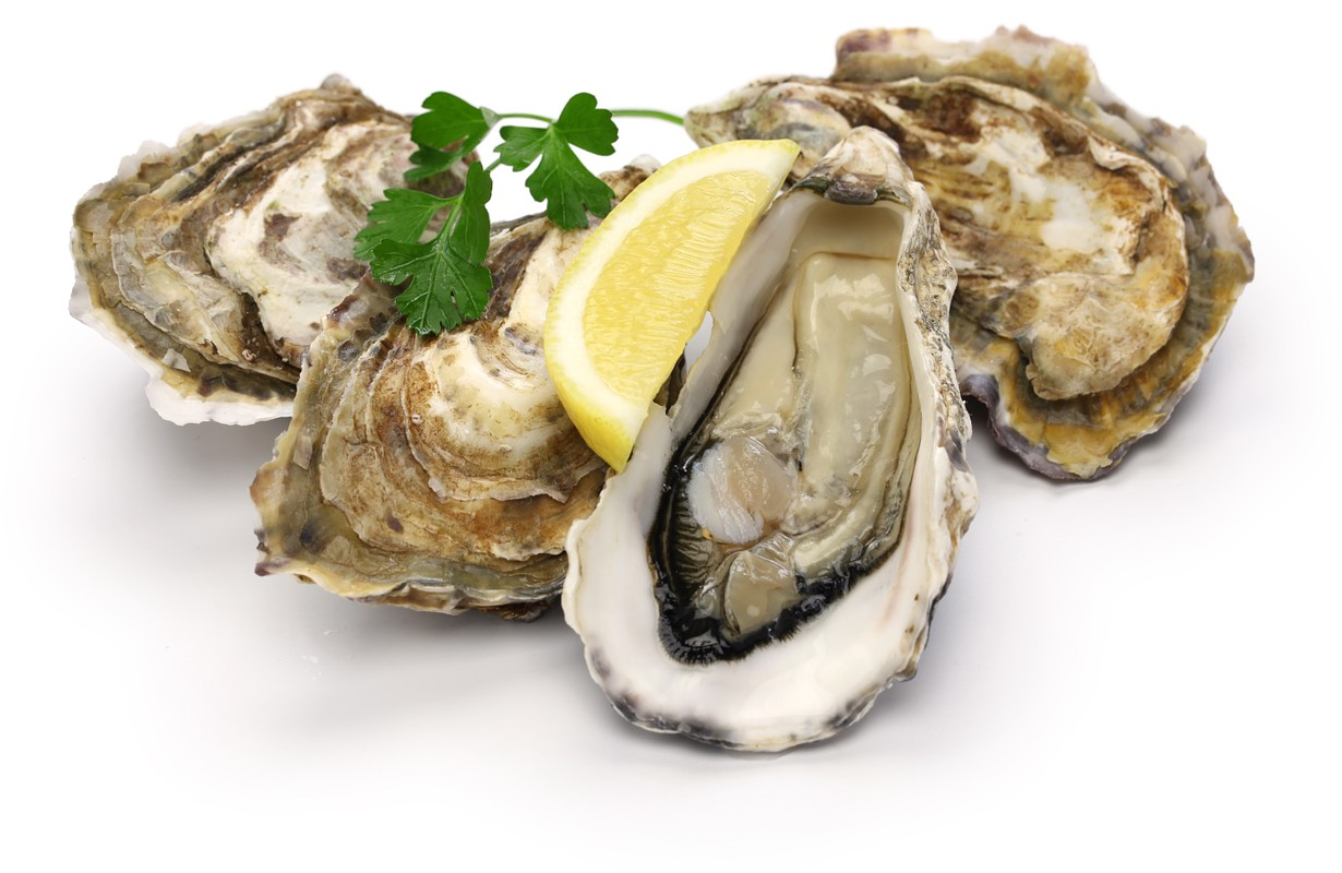 View Preview    fresh oysters isolated on white background