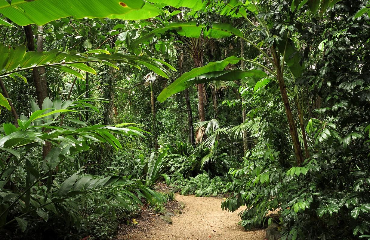 The Flecker Botanic Gardens, Cairns, Queensland, Australia
