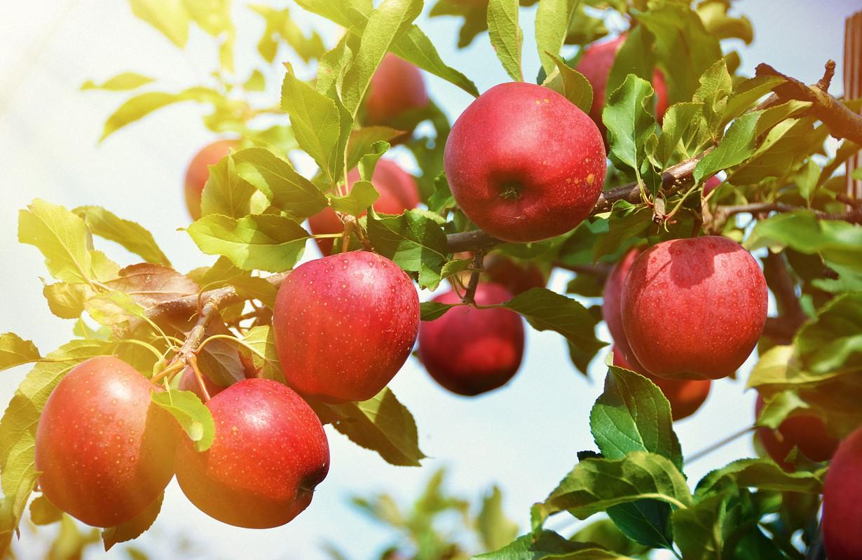 Apple Barn Winery - Pigeon Forge / Gatlinburg, Tennessee ...