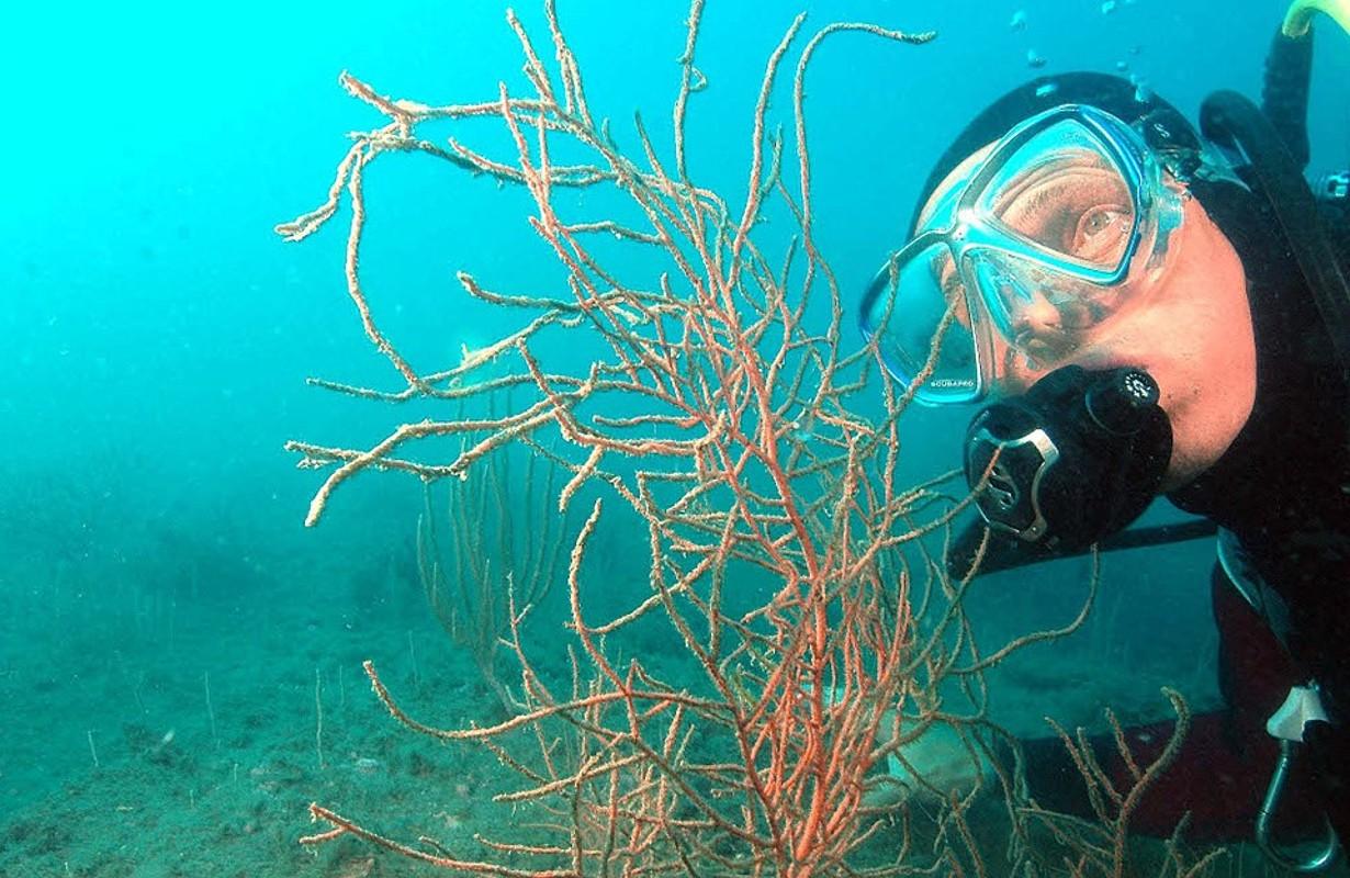 Le Cap d'Agde : underwater diving