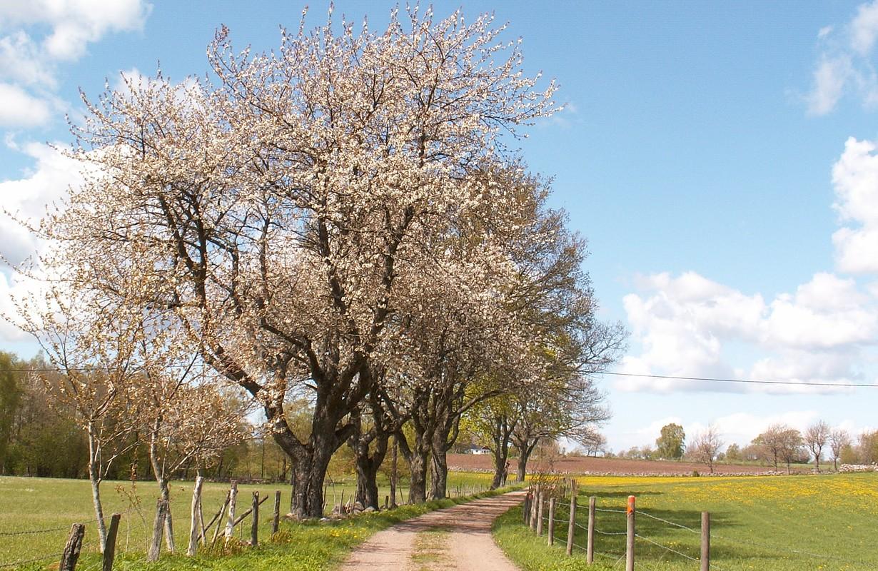 Vallevägen, Skövde