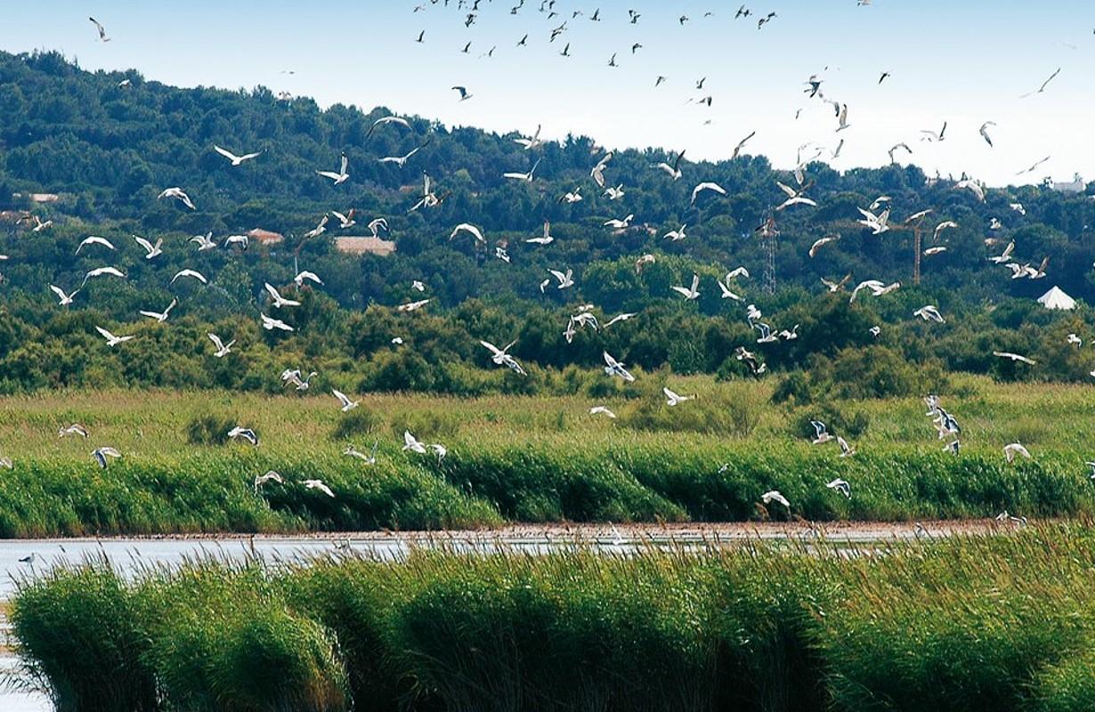 Le Cap d'Agde : Natonal Nature Reserve