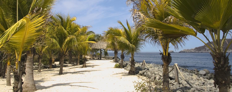 Palm trees at Los Gatos Beach Zihuatanejo, Mexico