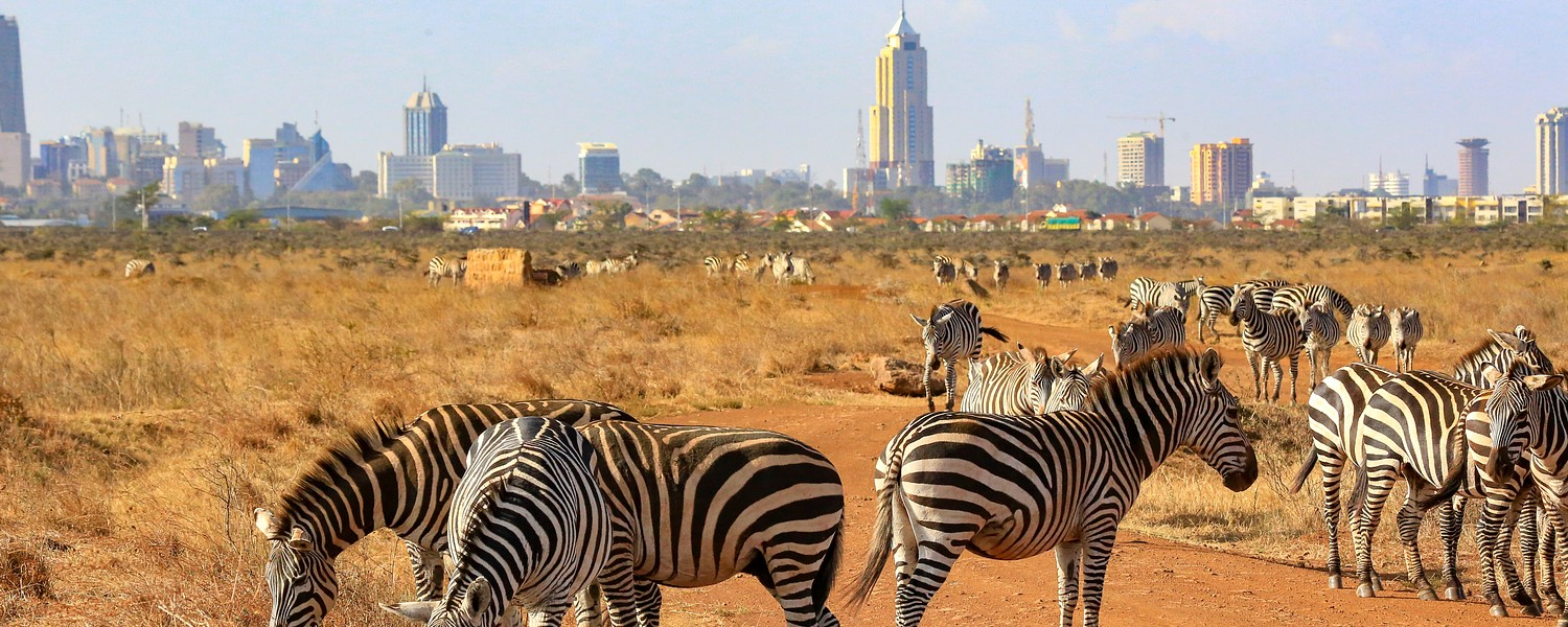 zebras in national park nairobi with city
