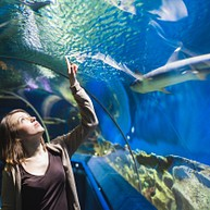 Ripley's Myrtle Beach Aquarium
