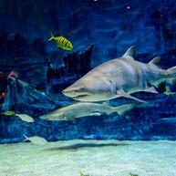 Beijing Aquarium (Beijing Haiyangguan)
