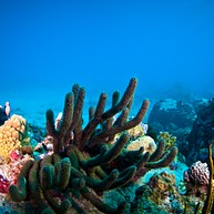 Octopus Diving and Snorkeling
