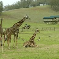 サファリ・ウエスト・ワイルドライフ・プリザーブ / Safari West Wildlife Preserve