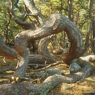 Trollskogen och Naturum
