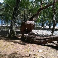Böda Ecopark