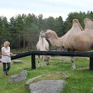 Junsele Zoo