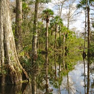 The Florida Everglades National Park