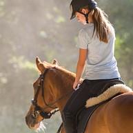 帕基里海滩骑马 (Pakiri Beach Horse Rides)