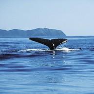 고래 보기