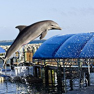 Dolphin Encounters