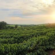 Green World Kaffefarm