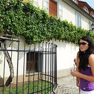 Maribor Wine Trail