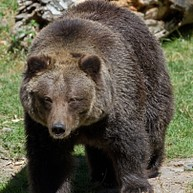 Jackson Hole Wildlife Safaris