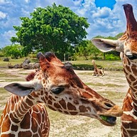 迈阿密地铁动物园 (Miami Metro Zoo)