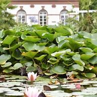 Botanical Garden (Palmengarten)