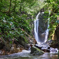 Springbrook and Tamborine Rainforest Tour